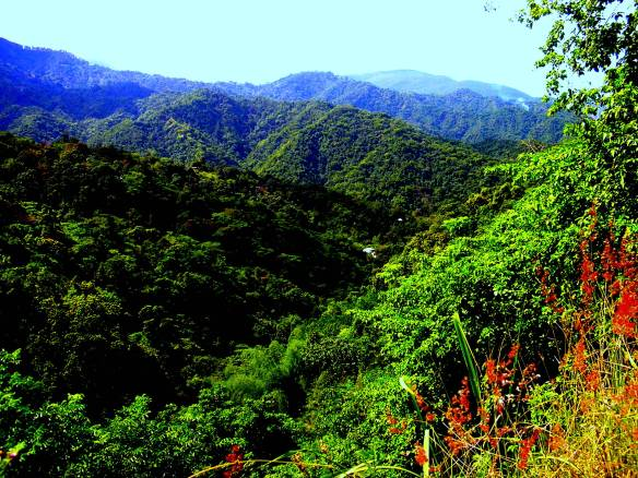 A photo showing the Jamaican Blue mountains
